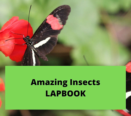 Amazing Insects Lapbook